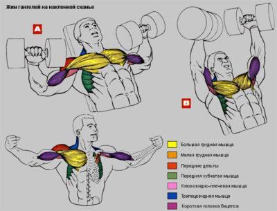 упражнения на грудь
