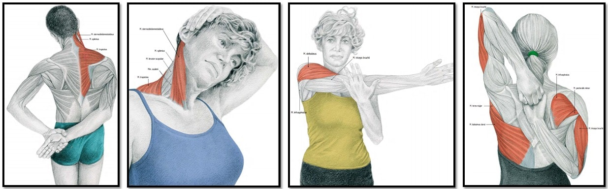 Как правильно сделать массаж плечевого пояса в домашних условиях