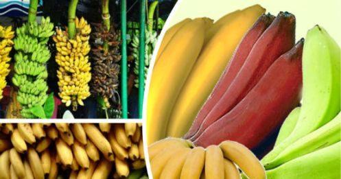banany-polza