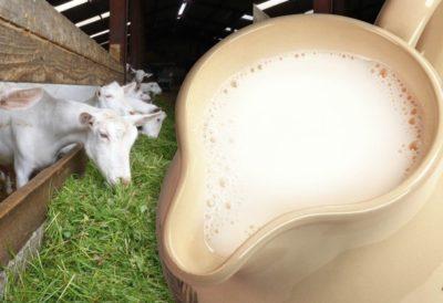 польза козьего молока